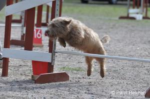 agility_yleiskuva_molly